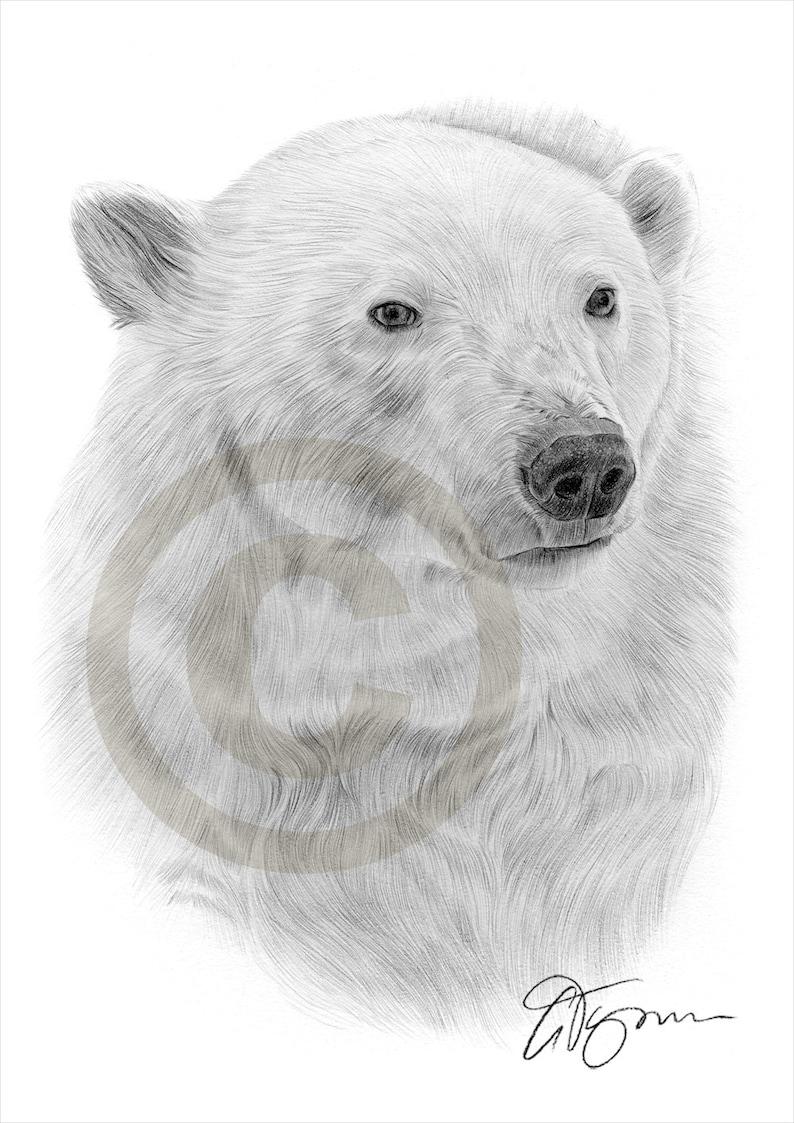 Polar bear artwork pencil drawing print wildlife art artwork signed by artist gary tymon 50 prints only 2 sizes pencil portrait