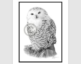 "SNOWY OWL - Original B&W Pencil Drawing - Portrait size 11.75"" x 8.25"" - Mount (matte) size 14"" x 11"" - Signed - animal bird art"