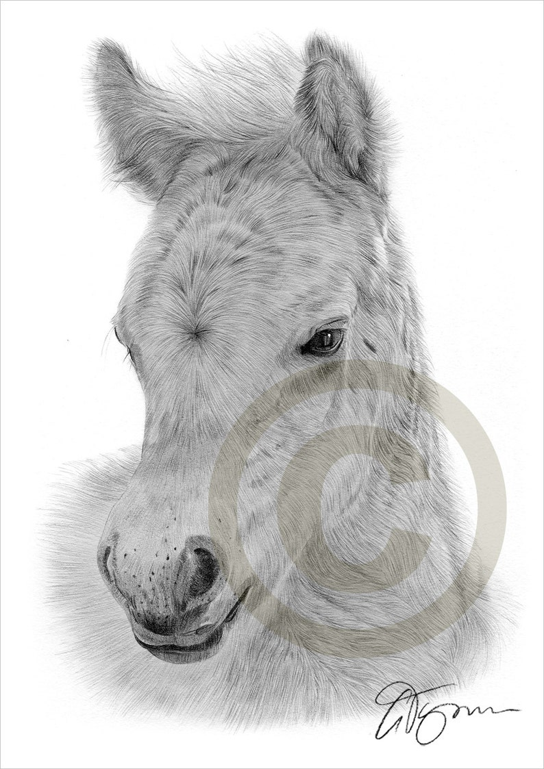 A4 sizes signed by artist Australian KANGAROO Pencil Drawing Print A3
