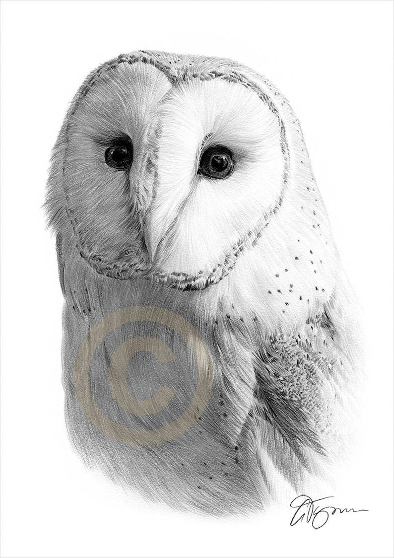 Barn owl pencil drawing print wildlife art artwork signed by artist gary tymon 2 sizes ltd ed 50 prints only bird pencil portrait