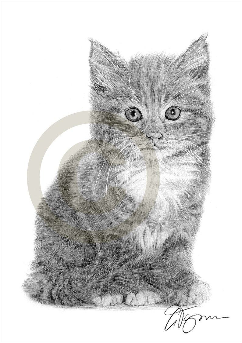 Cat kitten art pencil drawing print artwork signed by artist gary tymon a4 size ltd ed 50 prints only pencil portrait