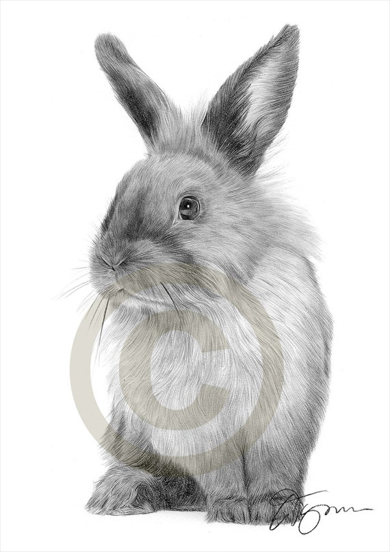 bunny rabbit pencil drawing print animal art artwork  etsy