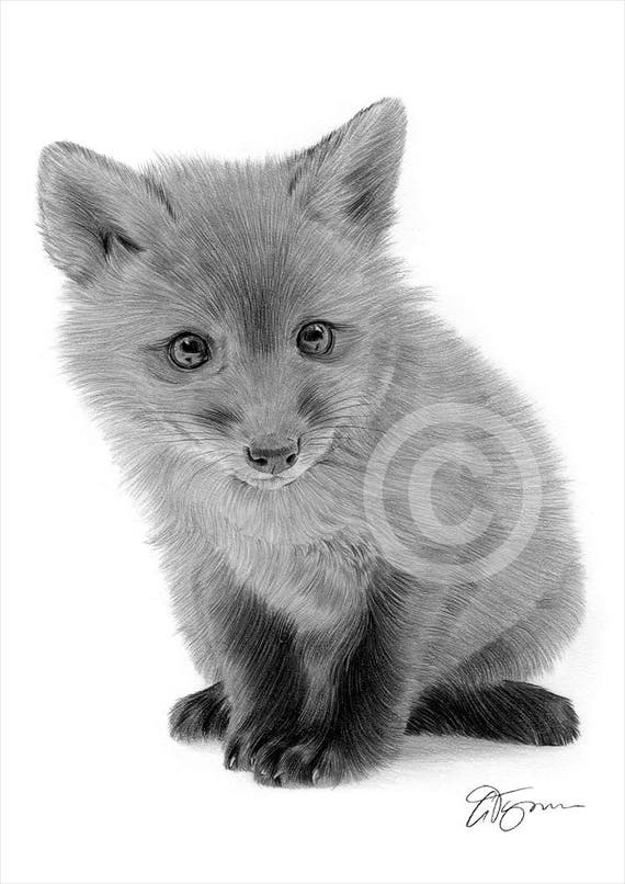 PORTRAIT OF A FOX pencil drawing print A4//A3 signed artwork by UK artist