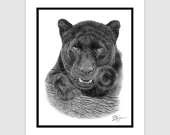 "BLACK PANTHER - Original B&W Pencil Drawing - Big Cat - Portrait size 10"" x 8"" - Mount (matte) size 12"" x 10"" - Signed - animal wildlife art"