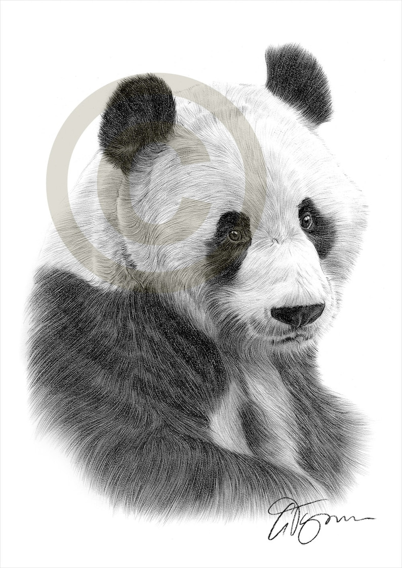 Giant panda pencil drawing print animal art artwork signed by artist gary tymon ltd ed 50 prints only 2 sizes pencil portrait