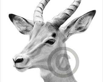 Digital Download - Pencil drawing of an African antelope - Artwork by UK artist Gary Tymon - Instant download