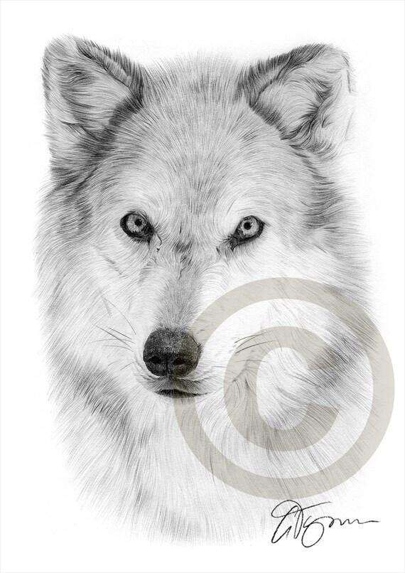 Loup Arctique Crayon Dessin Estampe Animal Art œuvre Dart Etsy