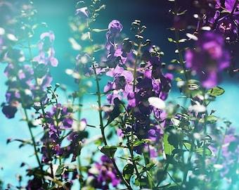 Nature Photography, Purple Flowers, Mexican Bush Sage, Blues, Vivid Nature, Colorful, Bright