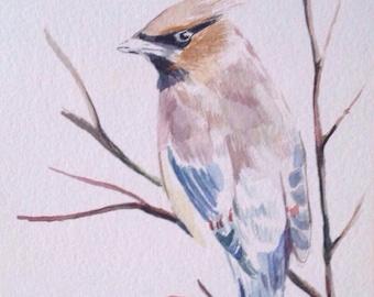 Original Art - Cedar Waxwing - Bird Art - Bird Illustration - Oregon Art -Bird Illustration
