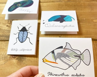 Note Cards - Blank Greeting Card- For Friends - Cute - Ocean - Scientific Name - Animals - Family - Mail - Biology