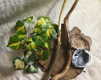 Ivy~Wands~Attached~Love~Friends~Fertility~Healing~Scallop~Shells~Offerings~Pagan~Wiccan~Witch~