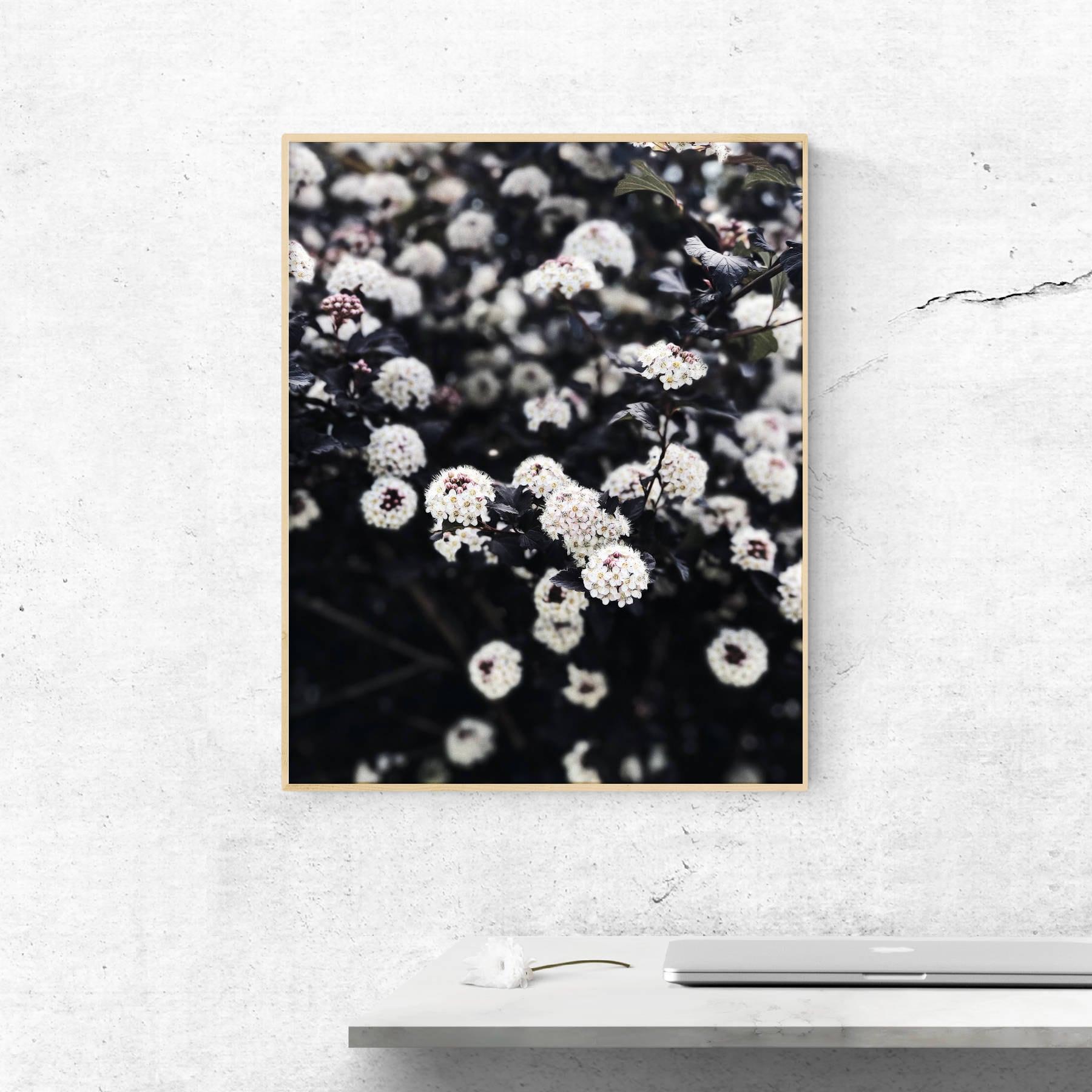 Flower Printable Floral Poster Flower Printable Flower Photo