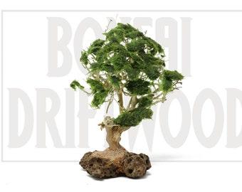 Aquarium Bonsai Tree Etsy