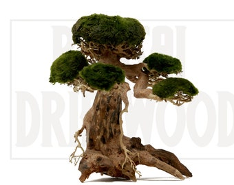 Aquarium Bonsai Tree Etsy