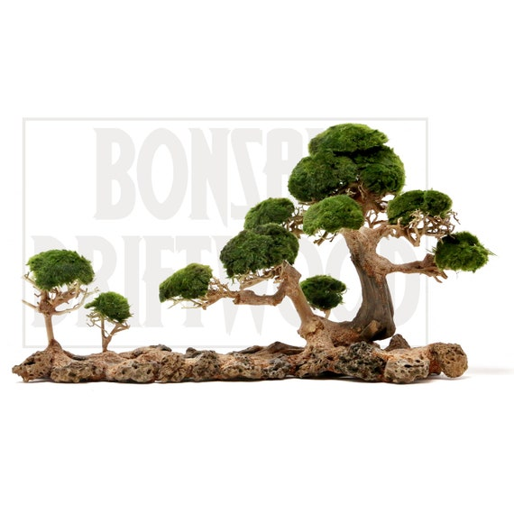 Aquarium Moss Tree Bonsai Driftwood Ld1 10 Inches Tall Etsy