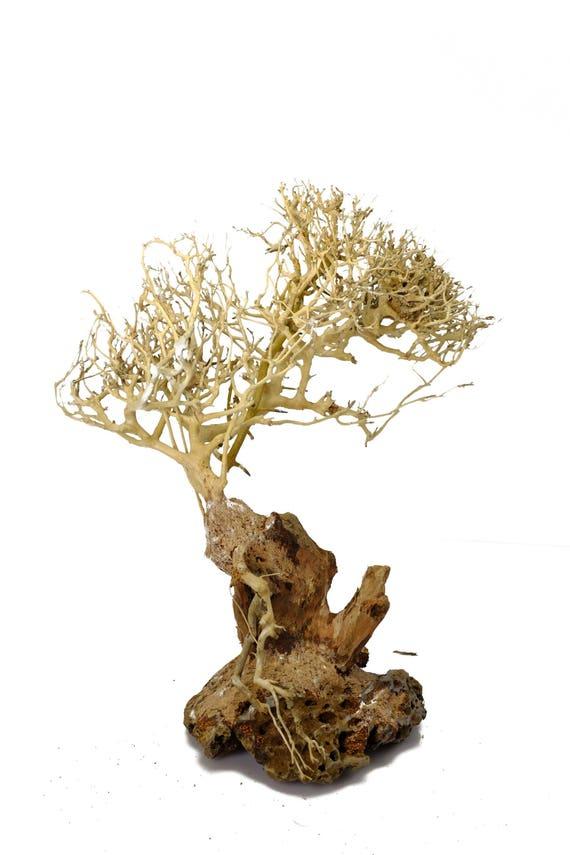 Aquarium Moos Baum Bonsai Treibholz Be 10 Zoll Gross Etsy