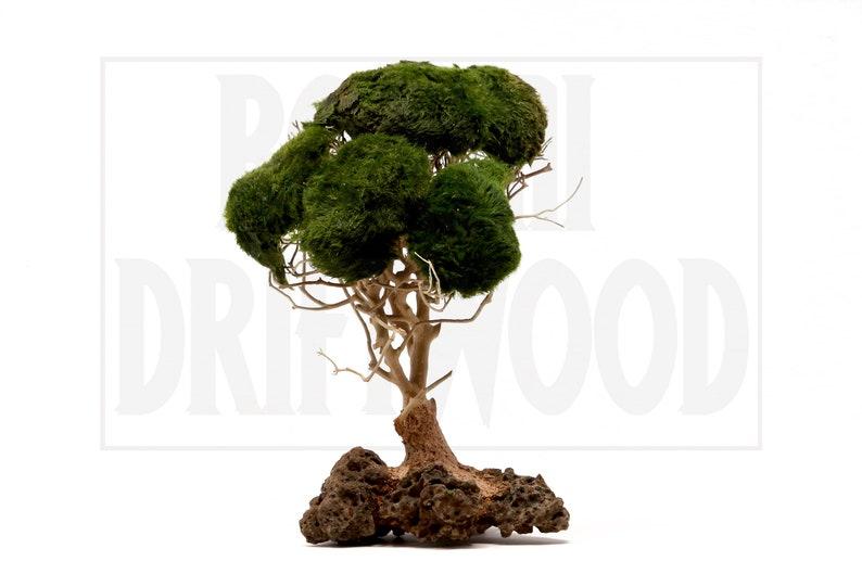Aquarium driftwood moss tree  Bonsai Driftwood moss Tree  BM image 0