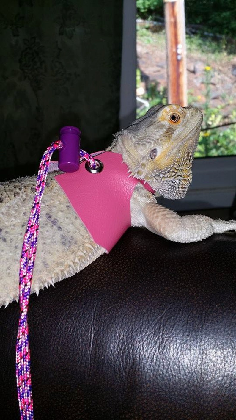 Medium Lizard Leash Harness