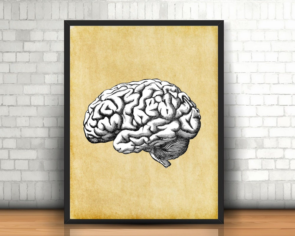 Brain Anatomy Print Neurolinguistics Wall Art Poster | Etsy