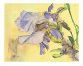 IRIS  Note Cards - Set of 5 - Made from Original Watercolor - 13.50 -  Free Shipping