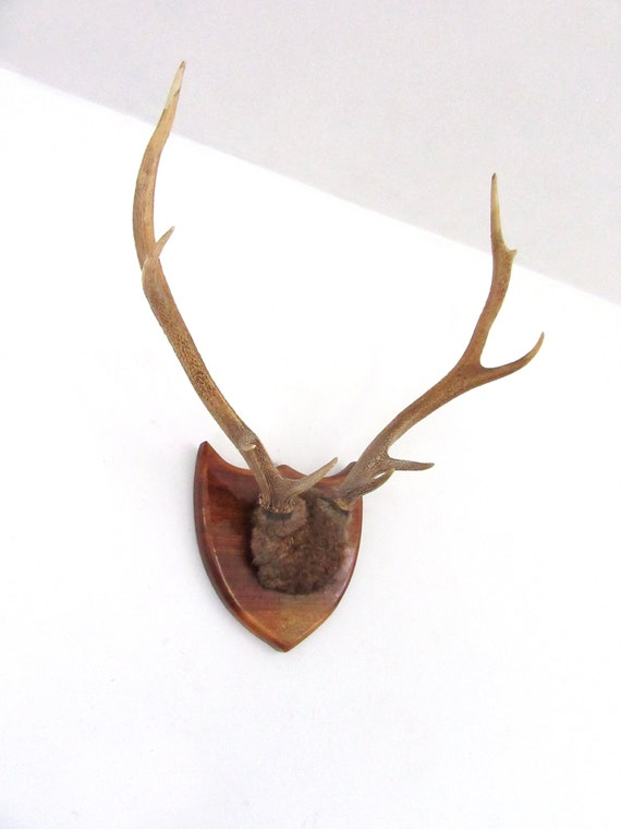 Decorative Ornaments Figures 30cm Rustic Vintage Wall Mounted Antelope Horns Home Decor Stag Deer Antlers Home Furniture Diy Rpqualitycontrol Com Br