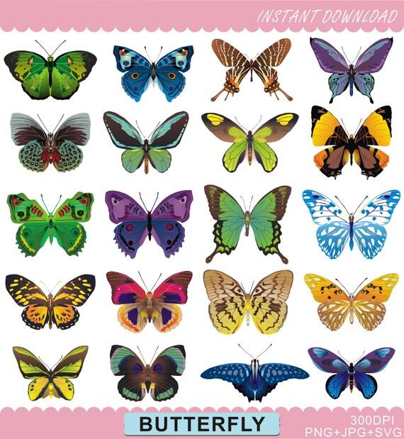 Butterfly Clipart Butterfiles Clip Art Digital Butterfly Etsy