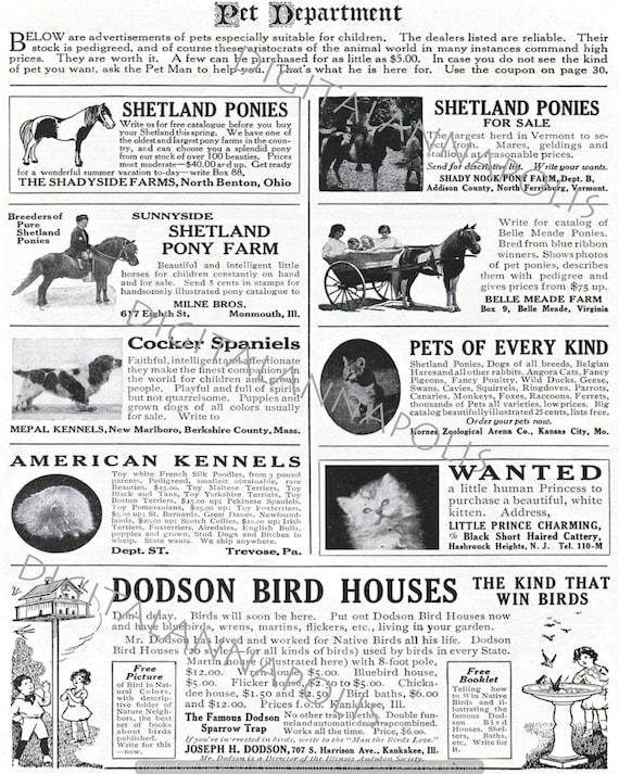 Vintage Pet Department Advertising Classified Pets for Kids Pony Cat Dog  Image 300 dpi jpg Digital Download Printable Clip Art 19th Century