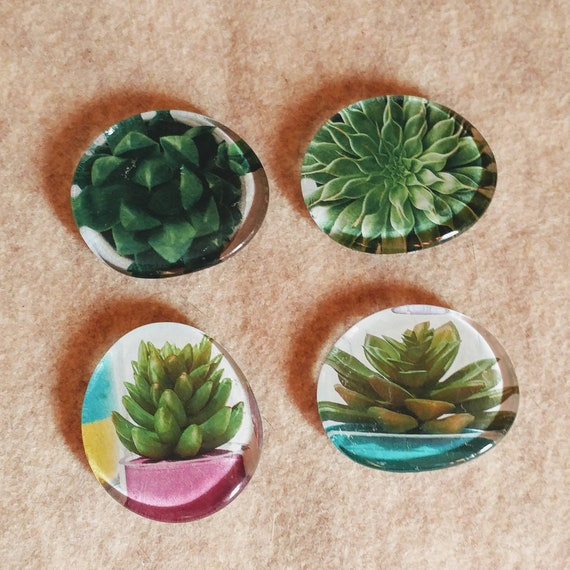 Handmade Succulent Refrigerator Magnets // Glass Succulent Magnets // Upcycled // Glass // Magnets // Set of 4