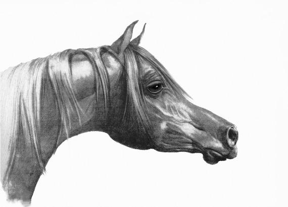 Bleistift Pferd Kopf Giclée Arabisches Pferd Zeichnung Kopf Zeichnung Drucken Kunstdruck Schwarz Und Weiß Wand Druck Inneneinrichtungen