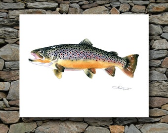 Brown Trout Art Print - Watercolor Painting - Fly Fishing Art - Signed by Artist DJ Rogers - Wall Decor