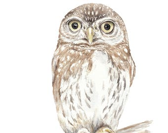 Owl Limited Edition Print 8.5x11 Watercolor