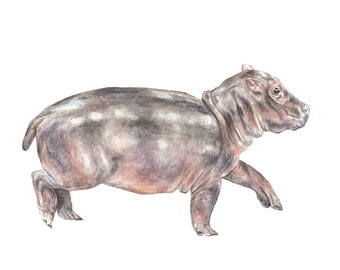 Hippo Limited Edition Print 8.5x11 Watercolor Cute Baby Animal Painting