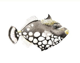 Clown Triggerfish Limited Edition Print 8.5x11 Watercolor