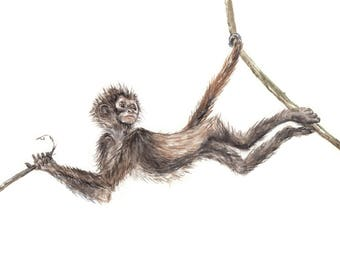 Cute Spider Monkey Swinging from Branches Limited Edition Print 8.5x11 Watercolor Jungle Painting