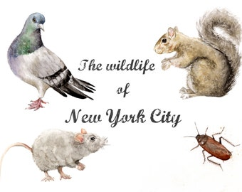 Wildlife of NYC Limited Edition Print - pigeon, rat, roach and squirrel!