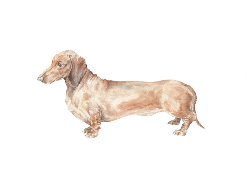 Dachshund Brown Smooth Coat Watercolor Doxie Limited Edition image 0