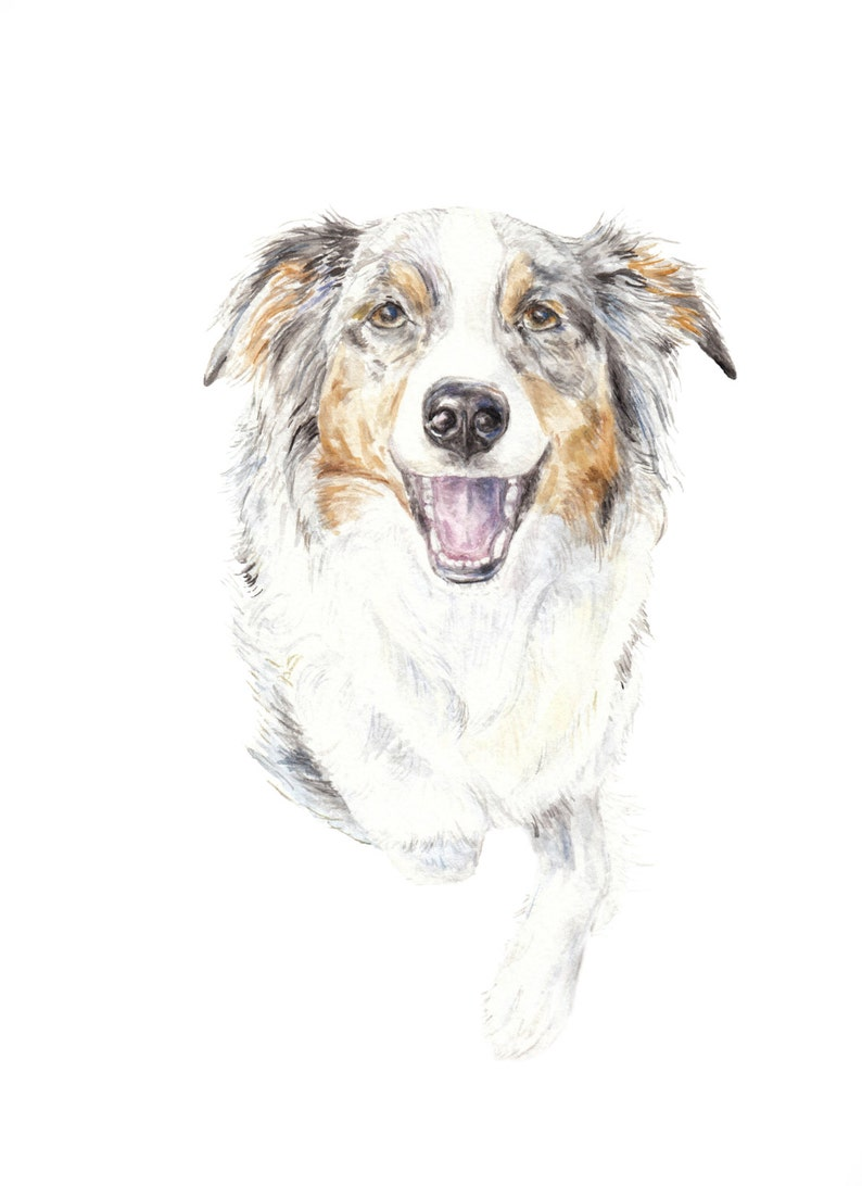 864e284cd4 Aussie Shepherd Dog Watercolor Limited Edition Signed Print 8.5x11