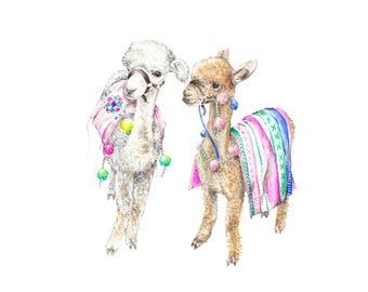 Colorful Baby Alpacas Llamas India Morocco Limited Edition Print 8.5x11 Watercolor