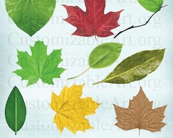 leaf clipart digital leaves clip art grape leaf silver maple etsy
