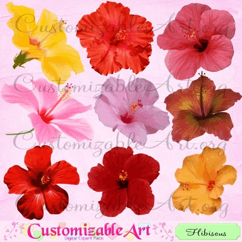 Hibiscus Clipart Digital Hibiscus Flower Clip Art Pink Red Etsy