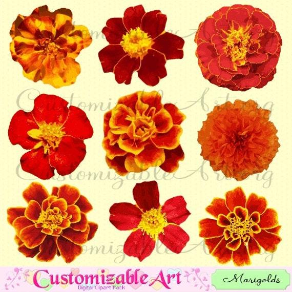 marigold clipart digital flower clip art tagetes flower red fiery rh etsystudio com Marigold Flowers marigold flower clipart black and white