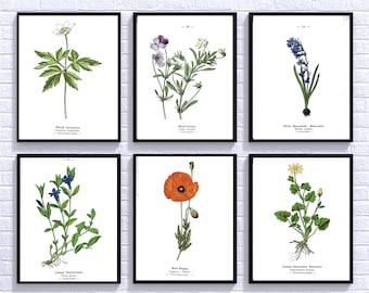 Botanical Printable Set, Set of 6 Prints, Printable Garden Art, Vintage Botanical Art, Flower Art Print Vintage, Print Set, Instant Download
