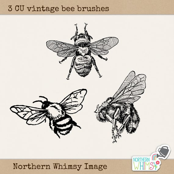 Abeja Clip Art Set 5 las imágenes PNG abejorro más pinceles | Etsy