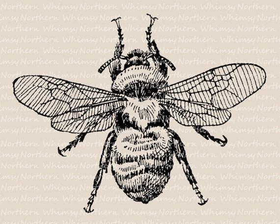 Bumblebee Clip Art Vintage Bee Illustration Antique Bee Etsy