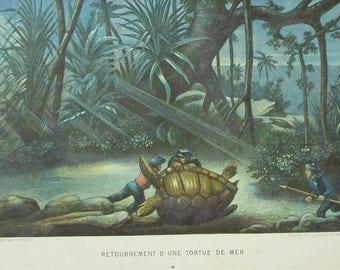 1881 Giant Sea Turtle, Tortoise Hunt. Antique Lithograph. Colorful, Original Natural History Print. Lackerbauer, La Monde de la Mer