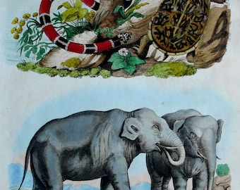 1839: Elephants, Coral Snake, Pond Turtle Engraving. Antique Handcolored Natural History Print by Guerin. Original.