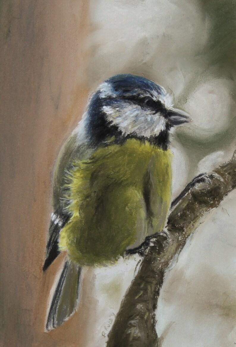 Blue Tit  Garden Bird Original Pastel Painting by Pamela image 0