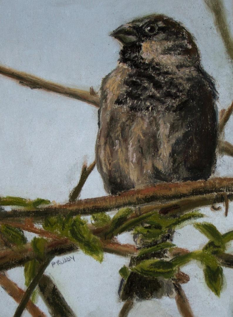Proud Sparrow image 0