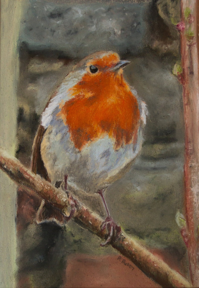 Curious Robin  a Garden Bird Original Pastel Painting by image 0