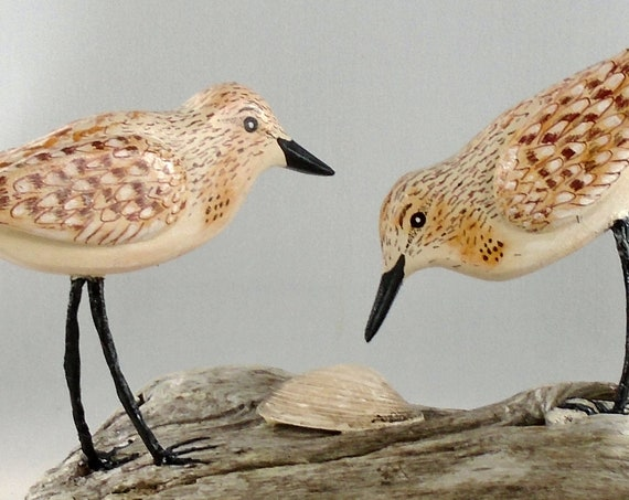 Driftwood Sanderling Pair on Driftwood Base!